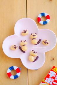 Choco ball Siamese cats