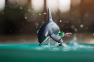 Yotsuba and the Killer Whale