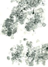 Sumi sakura